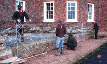 Bicton College students pruning Wistaria